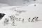 Antarktis 2012 Åsnepingviner på Cuverville I