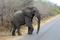 SYDAFRIKA 2014 Elefant hanne I 150 dpi