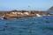 SYDAFRIKA 2014 Sälar o skarvar vid Hout Bay I 150 dpi