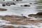 SYDAFRIKA 2014 Goliat Heron o hippos I 150 dpi