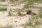 SYDAFRIKA 2014 Lejonflocken I 150 dpi