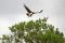 SYDAFRIKA 2014 Martial Eagle I 150 dpi