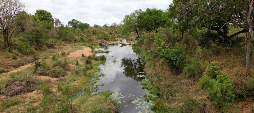 Kruger's National Park