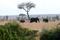 SYDAFRIKA 2014 Elefanter på savannen I 150 dpi