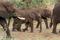 SYDAFRIKA 2014 Elefanthjorden I 150 dpi