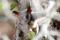 SYDAFRIKA 2014 Busch-Baby 150 dpi