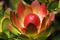 SYDAFRIKA 2014 Protea I 150 dpi