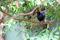 SYDAFRIKA 2014 Ross's Turaco I 150 dpi (i fångenskap)