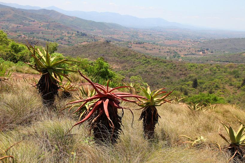Swaziland - ett av tre kungadömen i Afrika (de två övriga är Lesotho och Marocko)