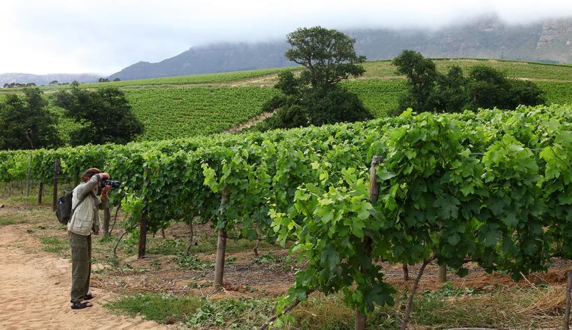 Vinodlingarna från 1600-talet vid Root Constantia norr om Kapstaden