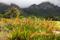 SYDAFRIKA 2014 Kirstenbosch Botanical Garden I 150 dpi