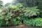 SYDAFRIKA 2014 Trädgårdsormbunkar I 150 dpi