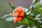 SYDAFRIKA 2014 Blomma sp 150 dpi