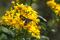 SYDAFRIKA 2014 Insekter och blomma I 150 dpi