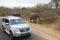 SYDAFRIKA 2014 Krugerparken med bilar II 150 dpi