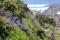 SYDAFRIKA 2014 Afrikas lilja III 150 dpi