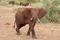 SYDAFRIKA 2014 Elefanter i Kruger NP II 150 dpi