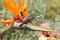 SYDAFRIKA 2014 Sunbird i blomma II JJ