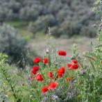 Extremadura 2013 Vallmon III