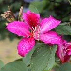 MEXICO 2013 Blommor röda