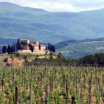 ITALIEN Montalcino Vingård