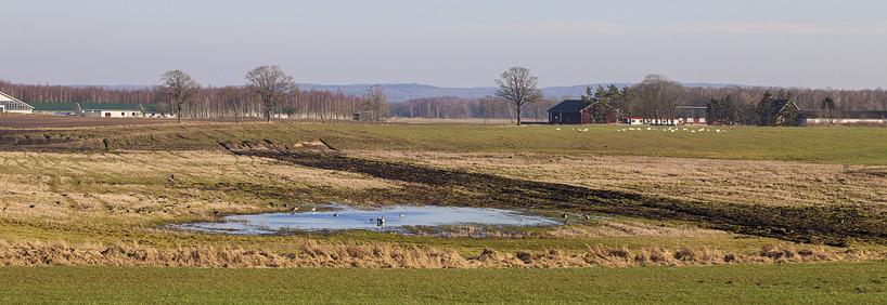 Vid Mjölkalångafälten rastade grågäss, sångsvanar, tranor och tofsvipor. Sånglärkor sjöng intensivt.