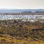 Våtmarkerna vid Slingra dig 150308