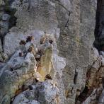 EXTREMADURA 2015 Gamflock på berget kopia