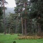 EXTREMADURA 2015 Gredosbergens skogar V 18x18 kopia