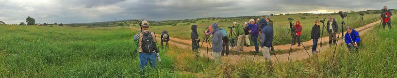 Fälten vid Monroy, där vi såg svartvingade glador