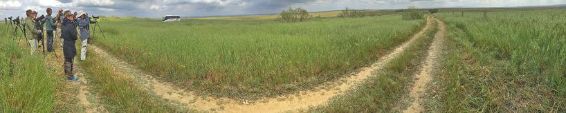 Fälten där en koloni med ängshökar häckade