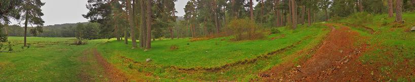 Den vackra tallskogen uppe i Gredosbergen, där många av våra skandinaviska arter häckade