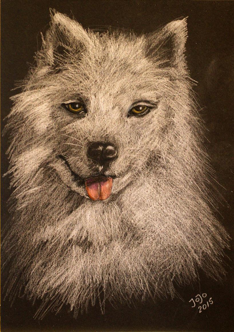 Samojedhunden Lykke, vit krita på svart kartong, A4-format