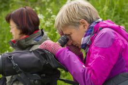 26 maj: Studiefrämjandets fågelcirkel besöker bl a dammen vid Röetved. Vi ser bl a lärkfalk, smådopping, häckande sångsvan och kanadagås samt ungar av både sothöna och gräsand. BIld ovan: Anna-Lena och Irene.