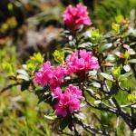 ÖSTERRIKE 2015 Alperna Alprosor  150 dpi