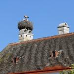 ÖSTERRIKE 2015 Storkbo i Rust I  150 dpi