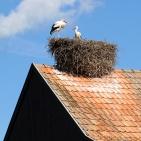Alsace 2012 Vita storkar