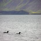 Island 2006 Islommar