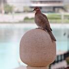 DUBAI 2015 Palmduva