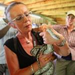 Jola och orm boaorm
