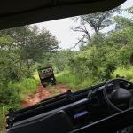 Safaritur i Botswana