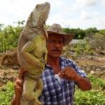 MEXICO 2013 Ödlefarmen III