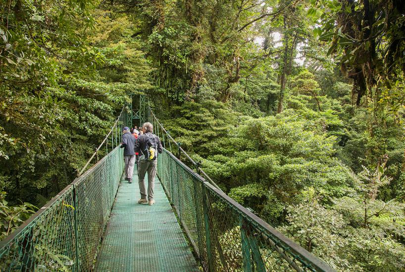 Hängande broar över molnskogen i Monteverde.