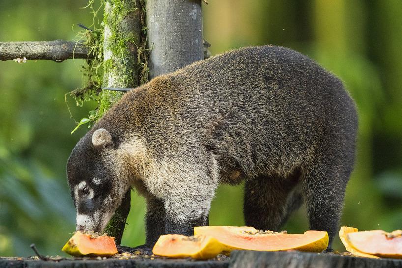 Näsbjörn - en trevlig krabat!
