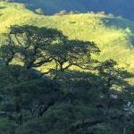 CR 2015 Molnskog i Monteverde VII