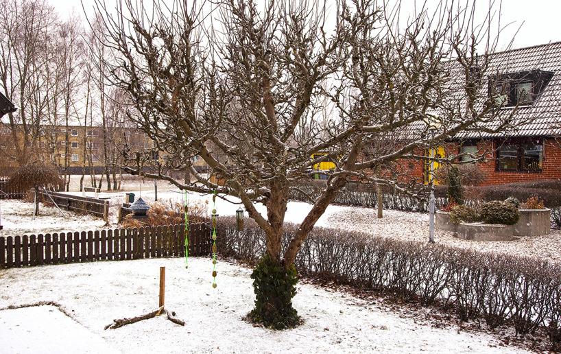 Den 7 januari 2016: 15 grader kallt på natten och lätt snöfall under dagen