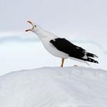 Antarktis 2012 Dominikanertrut III kopia