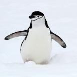 Antarktis 2012 Hakrem nära X kopia