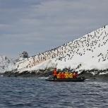 Antarktis 2012 Koloni med hakremspingviner kopia