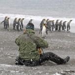 Antarktis 2012 Man och pingviner kopia
